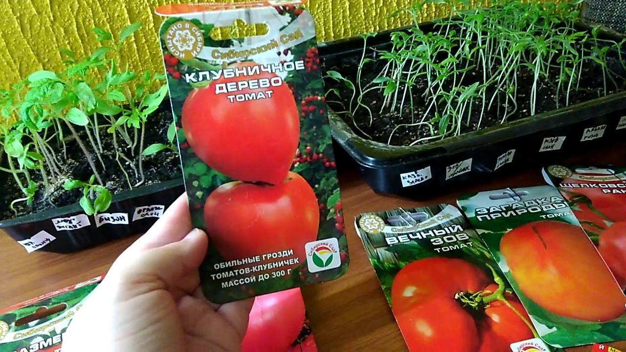 Холодостойкий сорт томата сибирской селекции «вечный зов»