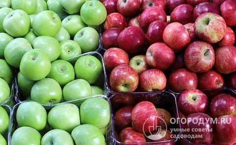 Готовим повидло из яблок различными способами