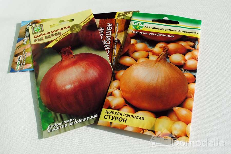 Сорт лука «стурон»: особенности выращивания