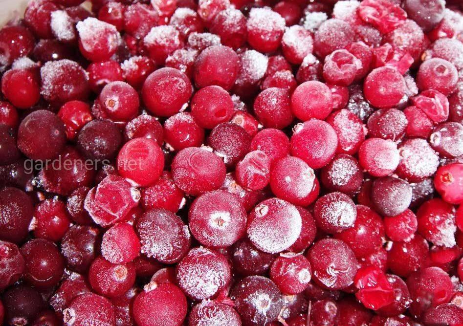 Заготовка брусники на зиму: вкусные рецепты с фото