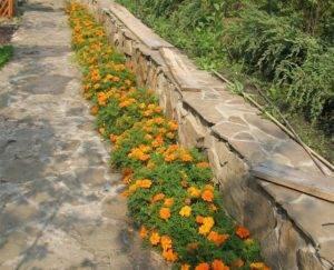 Бордюрные цветы для дачи — список многолетних растений с фото