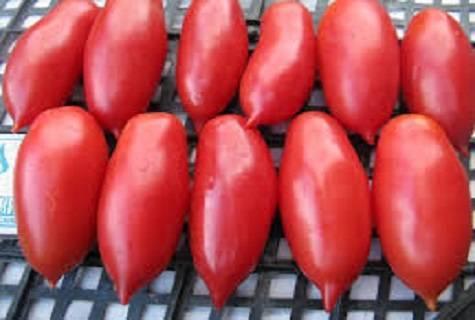 Нарядный сорт без недостатков — томат «алые свечи» : описание и фото