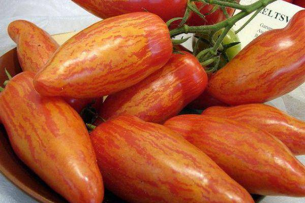Сорт винограда шерхан фото и описание