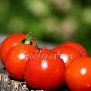Описание сорта томата Принц Боргезе, особенности выращивания и урожайность
