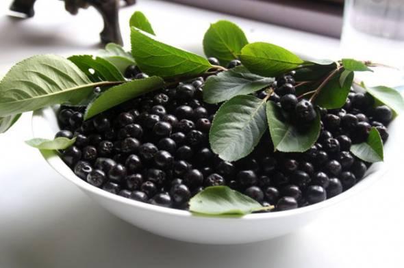 Рецепт из черноплодной. заготовка черноплодной рябины: рецепты приготовления на зиму. как лучше заготавливать на зиму