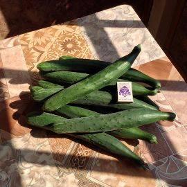 Борная кислота для увеличения урожая помидоров и огурцов