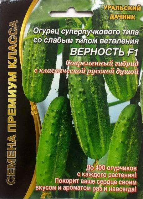 Фото, видео, описание, посадка, характеристика, урожайность, отзывы о гибриде огурцов «кс 90 f1»