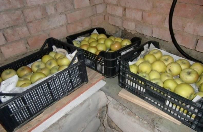 Как хранить яблоки в холодильнике