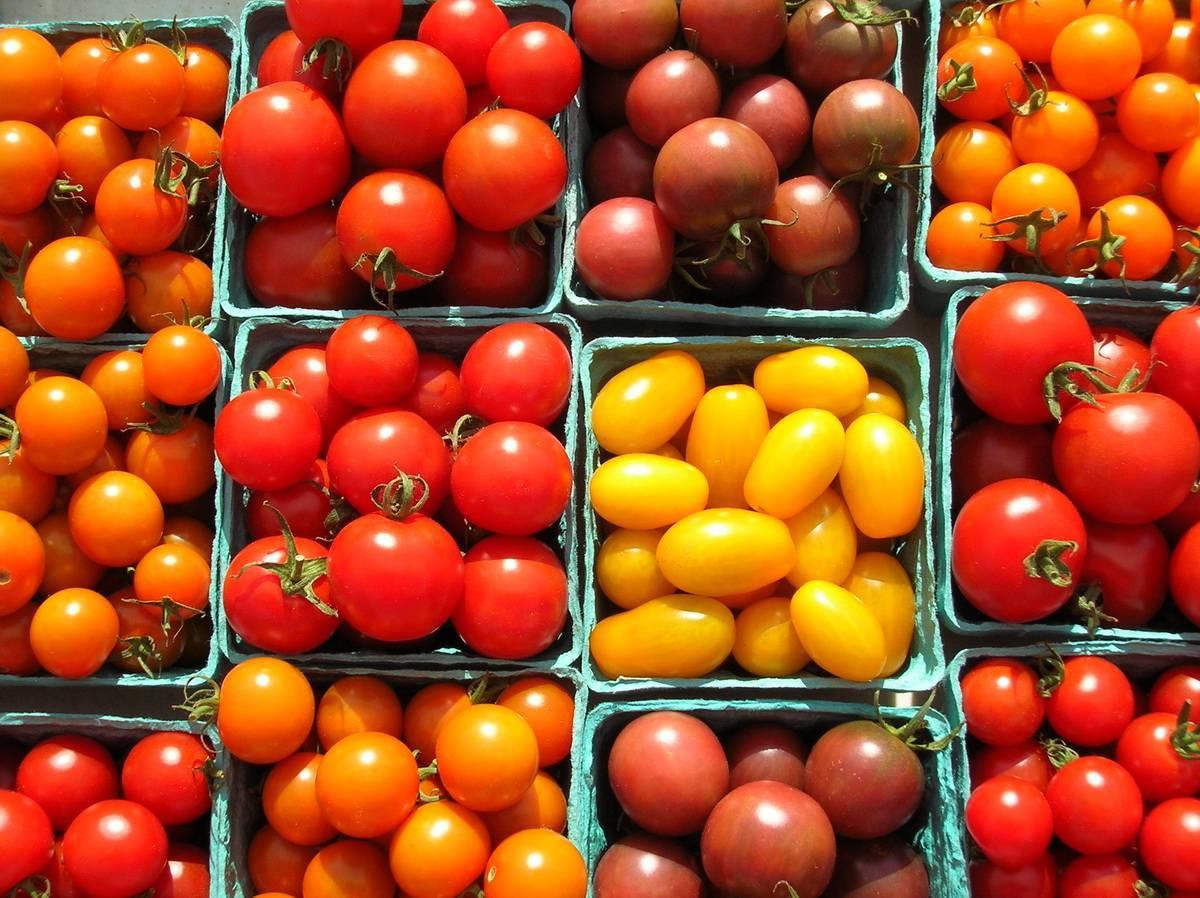 Описание и особенности выращивания томата «весенний хоровод»