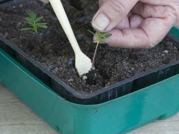 Как сохранить горшочные растения зимой на участке?