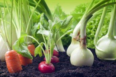 Как дачнику поможет соль: 8 способов применения на огороде
