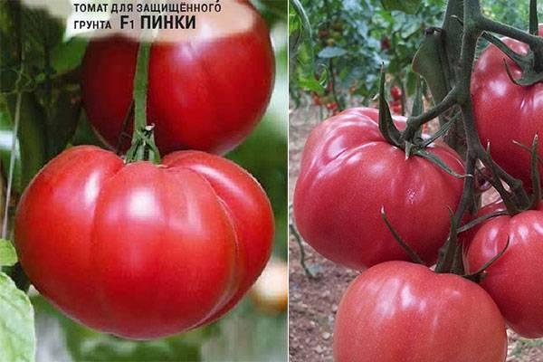 Томат дачный любимец: описание и характеристика сорта, отзывы огородников с фото