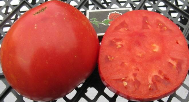Урожайный гибрид родом из голландии — описание гибридного сорта томата «марфа»