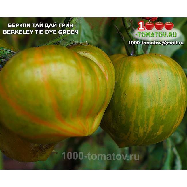 Описание томата беркли тай дай и его характеристика