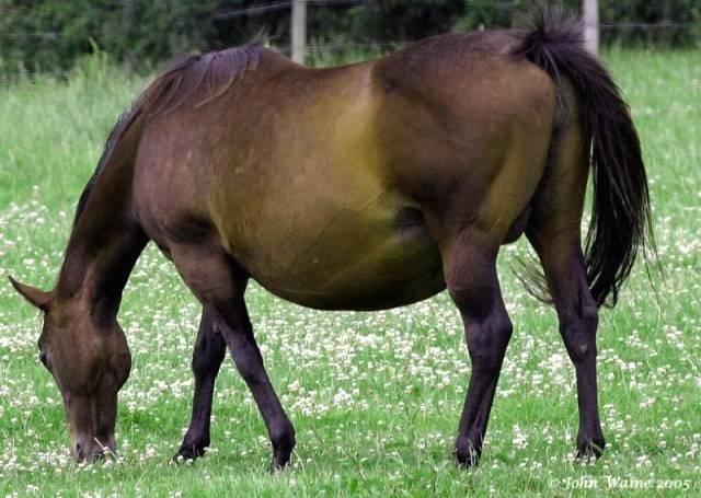 Сколько должна длиться беременность у лошадей