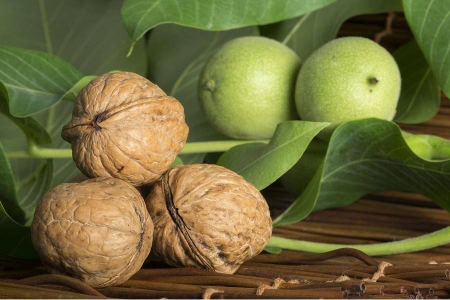 Описание и характеристики грецкого ореха сорта Идеал, выращивание и уход