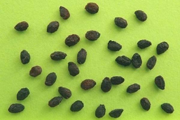 4 способа размножения смородины