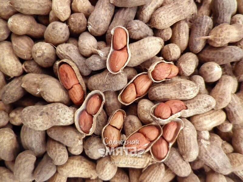 Как растет арахис? родина арахиса. виды и полезные свойства арахиса