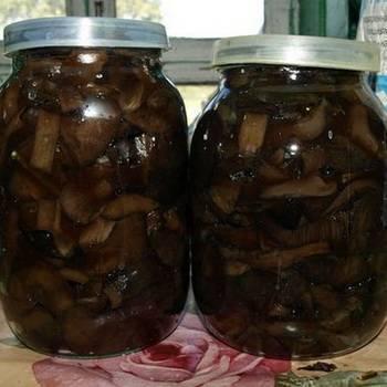 Как приготовить грибы зонтики (7 рецептов)