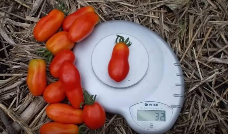 Мона лиза: все о культивации и применении томатов. полное описание агротехники