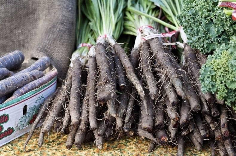 Особенности и характеристика белой моркови: описание популярных сортов и правила выращивания. полезные советы