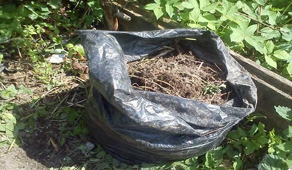 Особенности выращивания огурцов в мешках: описание процесса пошагово