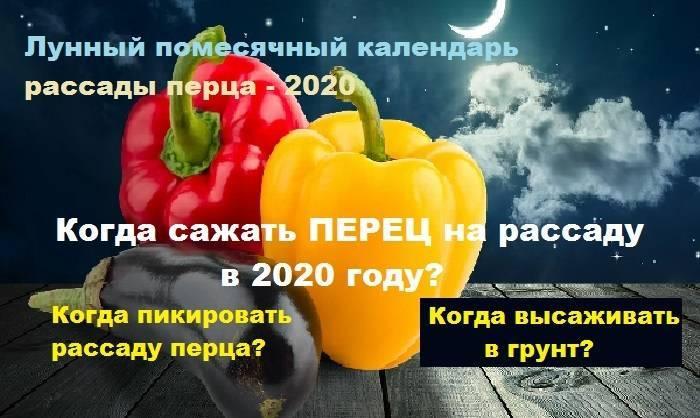 Когда сажать перец на рассаду в 2020 году по лунному календарю и регионам