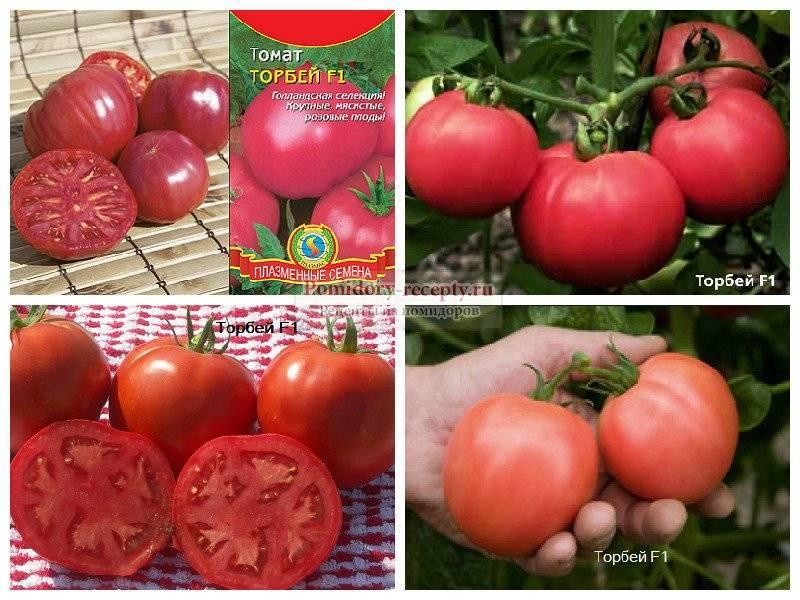 Торбей — голландский гибрид розовых томатов высокой урожайности и хорошего вкуса