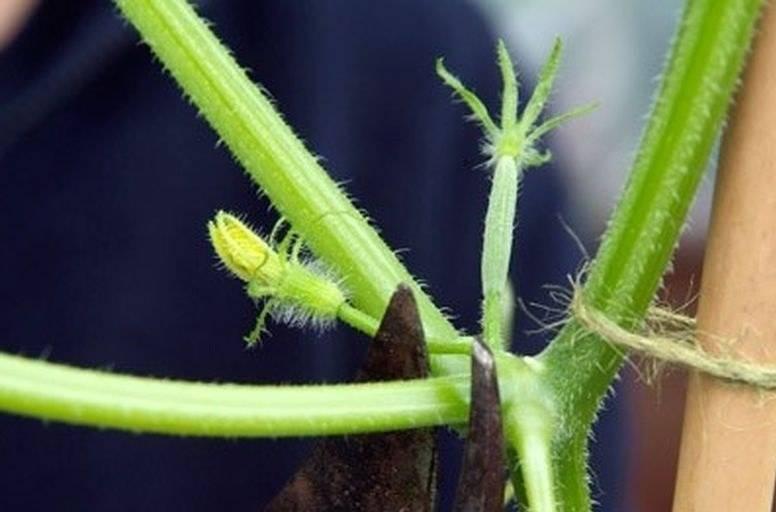 Размножение яблони: черенкование, воздушные отводки и другие методы