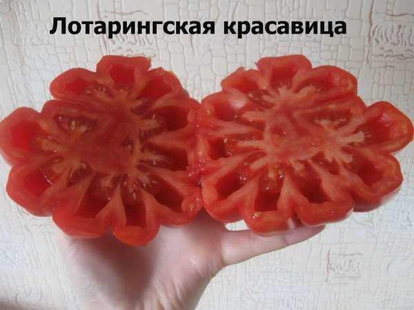 Характеристика томата лотарингская красавица