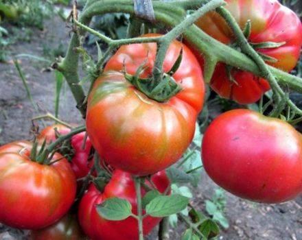 Описание популярного сорта и секреты выращивания — томат черри вишня красная