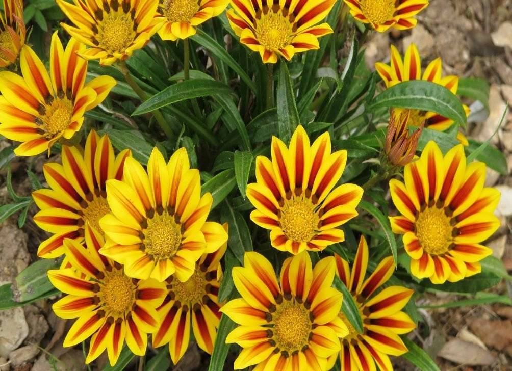 13 комнатных растений, которые легко вырастить из семян в домашних условиях