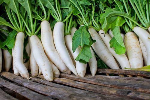 Дайкон – выращивание и уход