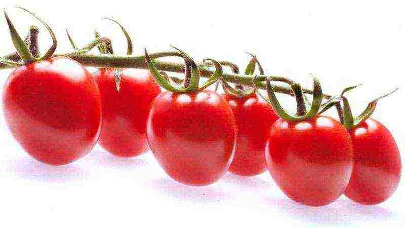 Описание сорта томата Субарктик, его характеристика и выращивание