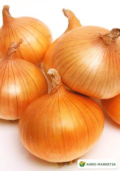Польза и вред красного лука: описание и сорта, уникальные свойства