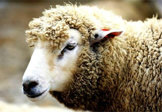 Скрещивание животных и человека. возможно ли скрещивание человека и животного? опыты по скрещиванию человека и животных