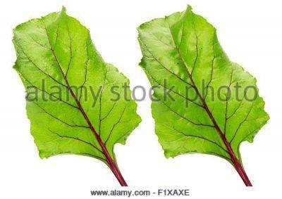 Краснеют листья у свеклы - почему так происходит и что делать.