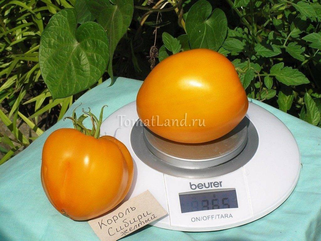Описание сорта томата Букет Сибири, его характеристика и урожайность