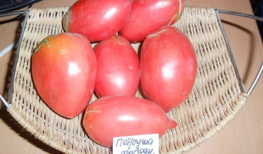 Томат петруша огородник - выращивание, описание и отзывы