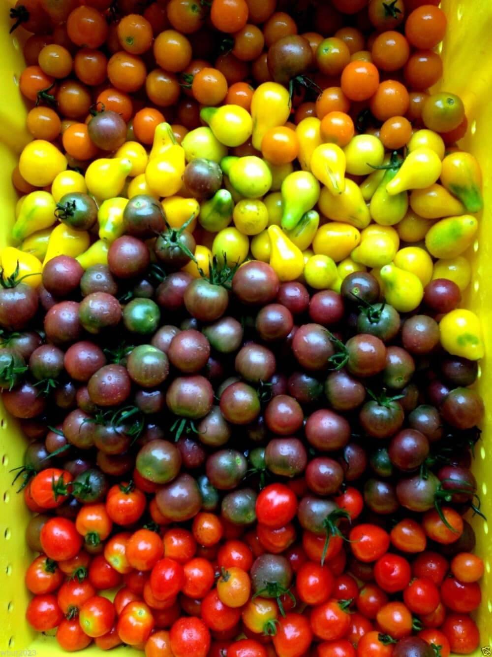 Чёрные помидоры