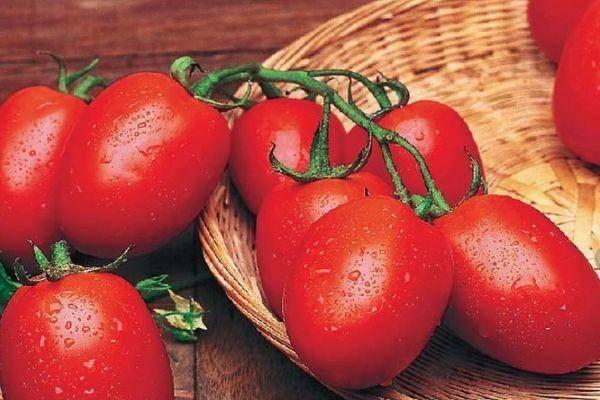 Томат рио гранде: характеристика сорта, описание и выращивание