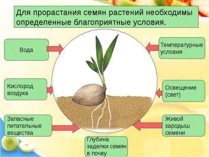Что такое всхожесть моркови и как ее проверить. как можно проверить и определить всхожесть семян помидоров как определить что взошло из семян