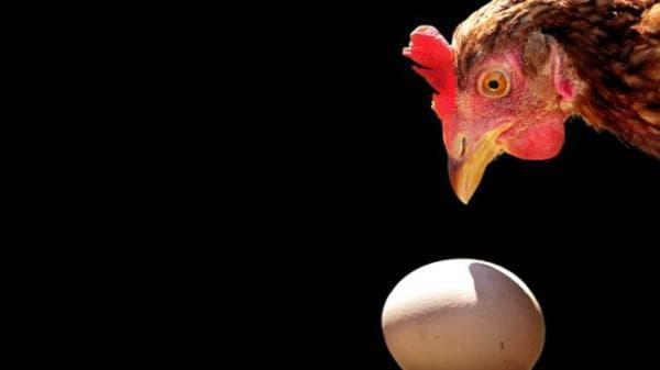 Почему куры несут яйца без скорлупы?