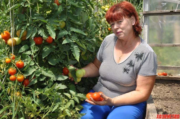 Как опрыскивать помидоры смесью молока с йодом — правила обработки и состав удобрений