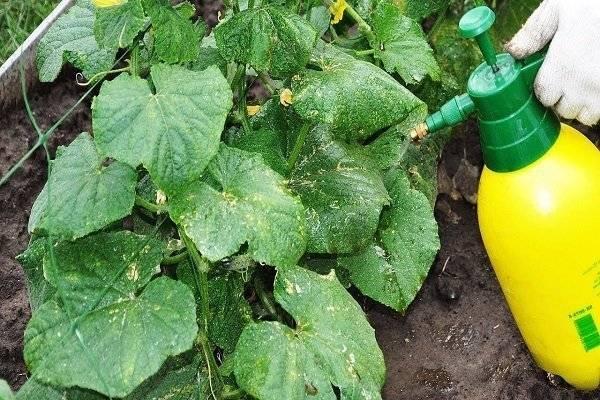 Калийные удобрения: особенности использования при выращивании огурцов