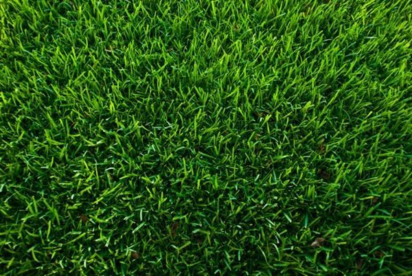 Газонная трава которая уничтожает сорняки - выясним какие сорта и смеси эффективно вытесняют сорняки с участка