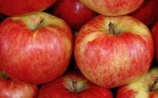 Загадочный и фантастический сорт яблонь апорт