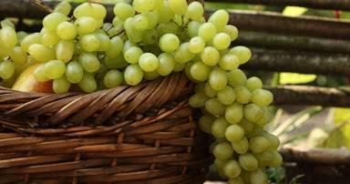 Рецепты консервирования винограда на зиму