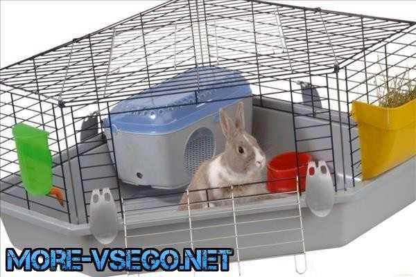 Карликовый кролик: уход и содержание в домашних условиях
