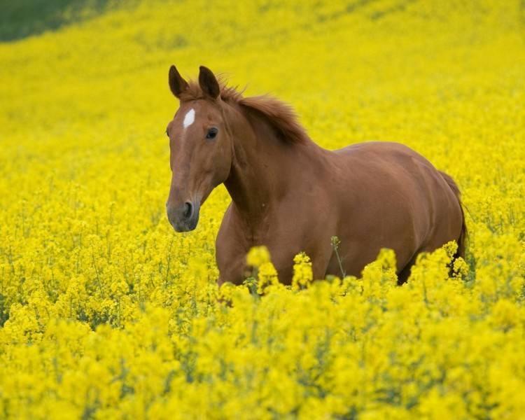 Как ухаживать за лошадью